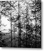 Through The Spring Forest Metal Print
