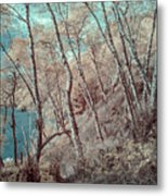 Through The Trees In Infrared Metal Print
