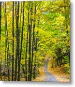 Through Yellow Woods Metal Print