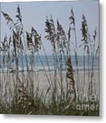 Thru The Sea Oats Metal Print