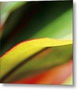 Ti-leaf Abstract Metal Print