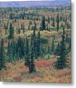 Tiaga Fall Colors, Tundra And Spruce Metal Print