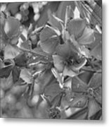 Tibouchina In Black And White Metal Print