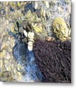 Tide Pool Metal Print