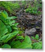 Tierney Springtime - New England Forest Metal Print