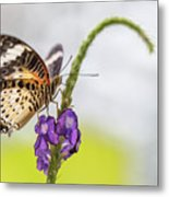 Tiger Butterfly Perched On A Flower Metal Print