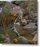 Tiger Crossing Poster Metal Print