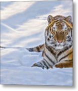 Tiger In The Snow Metal Print