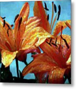 Tiger Lilies After The Rain - Painted Metal Print