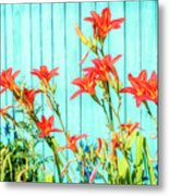 Tiger Lily And Rustic Blue Wood Metal Print