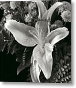 Tiger Lily Orchid  2 Metal Print