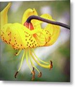 Tiger Lily. Metal Print