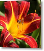 Tiger Lily0170 Metal Print