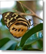 Tiger Longwing Butterfly I Metal Print