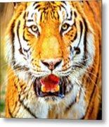 Tiger On The Hunt Metal Print
