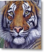 Tiger Portrayal Metal Print