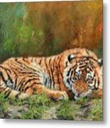 Tiger Repose Metal Print