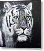 Tiger Metal Print