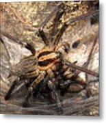 Tiger Spider  Metal Print