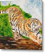 Tiger Stretching Metal Print