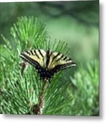Tiger Swallow Tail Metal Print