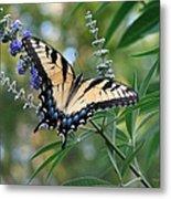 Tiger Swallowtail 1 Metal Print