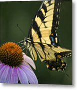Tiger Swallowtail 1 Metal Print