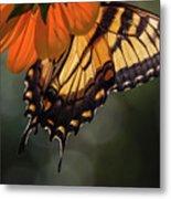 Tiger Swallowtail - 2 Metal Print