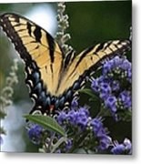 Tiger Swallowtail 3 Metal Print