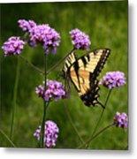 Tiger Swallowtail Among The Verbena   Metal Print