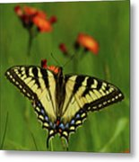 Tiger Swallowtail Butterfly Metal Print