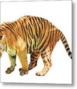 Tiger White Background Metal Print