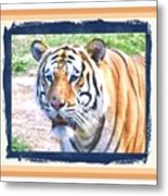 Tiger With Border Metal Print