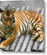 Tigers Look Metal Print