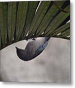 Tightrope Walker Bird Metal Print