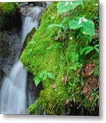 Tillium By Baxer Creek Metal Print