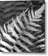 Tilted Fern Metal Print