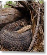 Timber Rattlesnake Metal Print