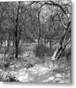 Timberland Infrared No3 Metal Print