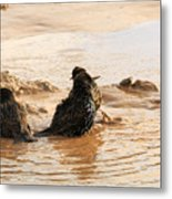 Time For A Mud Bath Metal Print