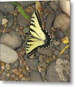 Time For A Rest Metal Print