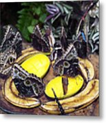 Time Out For Lunch Metal Print