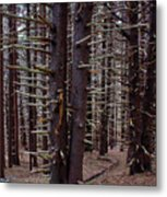 Timeless Forest Metal Print