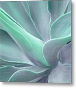 Tinted Agave Attenuata Abstract Metal Print