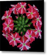 Tiny Bunch Of Red And Pink Flowers Metal Print
