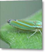 Tiny Leafhopper On Cucumber Leaf Metal Print
