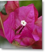 Tiny Little White Flower Metal Print