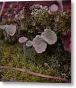 Tiny Mushrooms  Metal Print