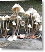 Tiny Mushrooms On The Step Metal Print