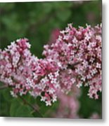 Tiny Pink Flowers Metal Print
